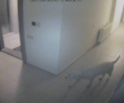 Hırsıza kendini sevdiren köpek
