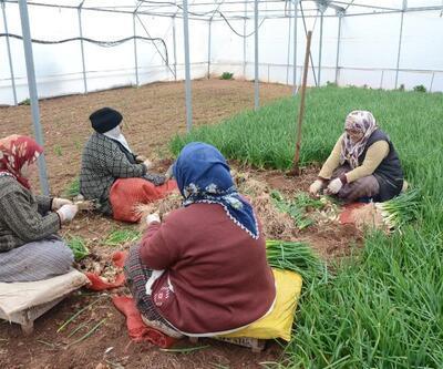 İstanbullunun yediği yeşilliği bu ilçedeki üreticiler karşılıyor