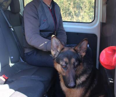 Köhne binada tutulan köpek kurtarıldı