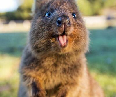 Dünyanın en mutlu hayvanı