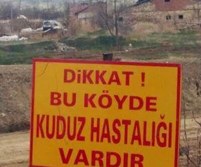 Dikkat! Bu köyde kuduz hastalığı var