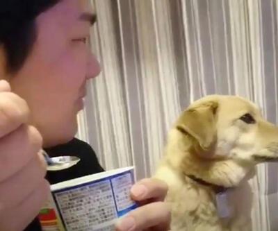 Sahibiyle asla göz göze gelmeyen köpek