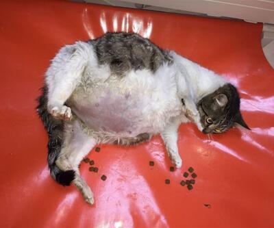 Ölmek üzereyken bulunan kedi sağlığına kavuştu