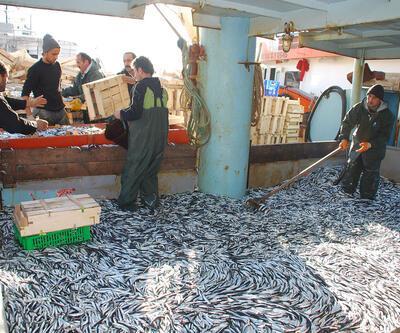 Karadeniz'deki HES'ler hamsiyi de tehdit ediyor