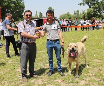 Çoban Köpekleri güzellik yarışmasında boy gösterdi