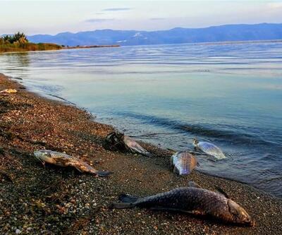 İznik Gölü'ndeki balık ölümleri korkutuyor