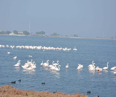 Flamingolar İzmir'deki lagünü terk ediyor