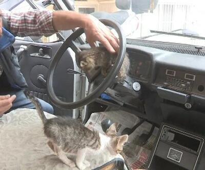 Kediler için otomobilini yuvaya dönüştürdü