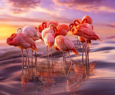 Pembe ve asil: Dünya Flamingo Günü