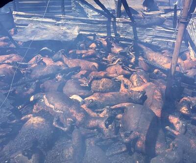 Manavgat'taki yangında 550 küçükbaş, 4 büyükbaş hayvan öldü