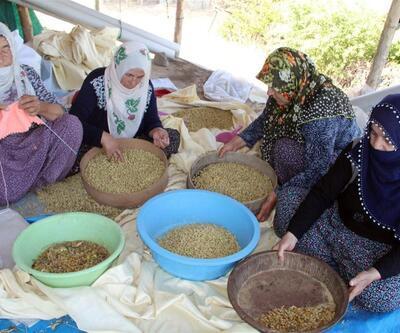 Uzun yaşamanın sırrını açıkladı: Tunceli'de yetişen dut
