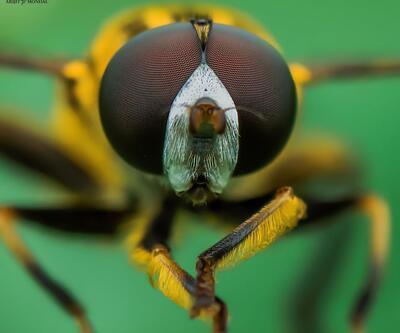 Güzelsin böceğim, ama çok yakından!