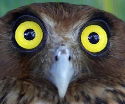Baykuşlar tehlikede... Suçlusu, Harry Potter serisi