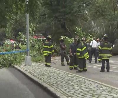 Central Park'ta devasa ağaç devrildi: 4 yaralı