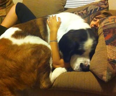 Artık kucağa sığmayan, bunun da farkında olmayan köpekler