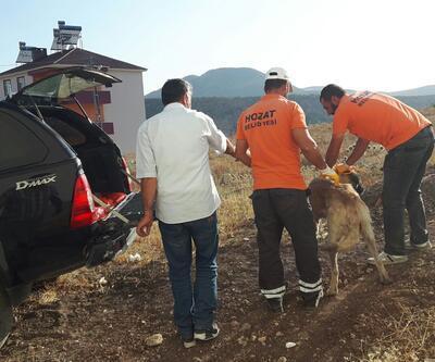 Yaralı köpeği makam aracıyla taşıdı