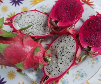 Ananasın krallığına son veren ejder meyvesi Ortaca'da