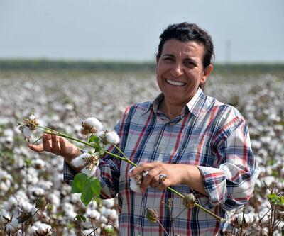 Kadın mühendis 3 yerli pamuk tohumu ıslah etti