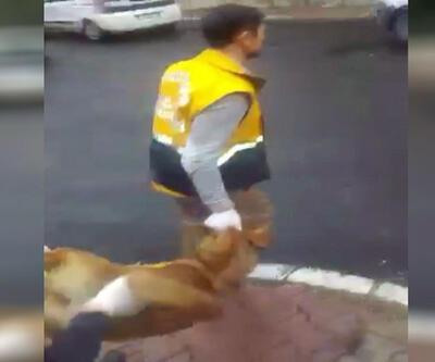 Belediye 100 köpeği topladı, hayvanseverler ayağa kalktı