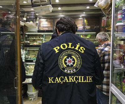 Eminönü'nde petshoplara şok baskın