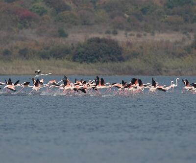 Flamingoların Hersek Lagünü'ndeki dansı büyüledi