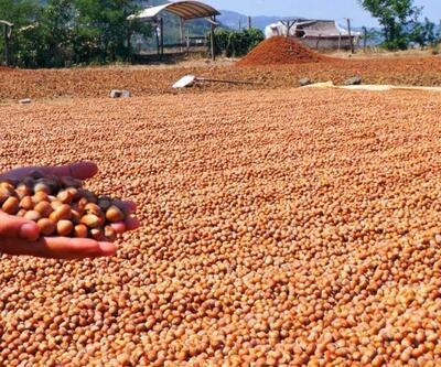 2 aylık fındık ihracatı 66 bin tonu buldu