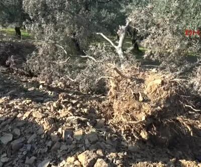 Gölet için zeytin ağaçlarını söktüler