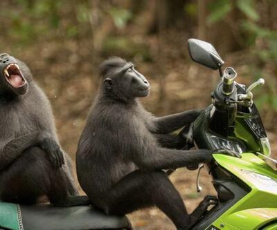 En komik yabani hayvan fotoğrafları