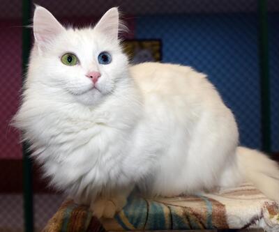Van kedileri kışlık konaklarına alındılar