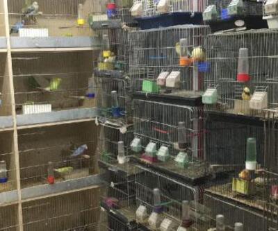 Petshoptan 10 bin liralık kuş çalındı