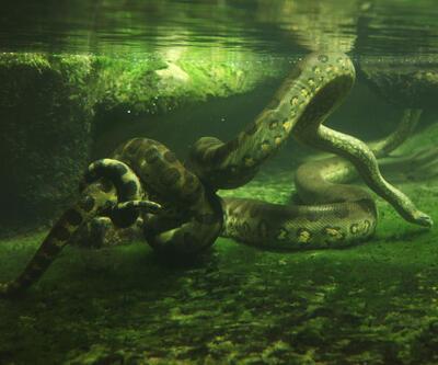 Dünyada yaşayan en büyük 12 canlı