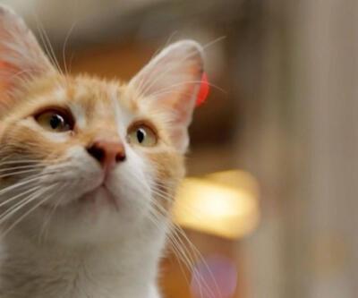 Kedi belgeseli en iyiler arasında