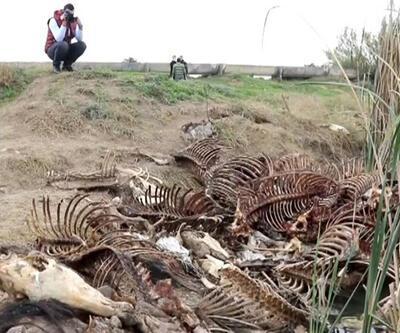 Bataklıkta at ve eşek kemikleri bulundu