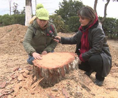 Başkan'dan proje savunması: Evinizdeki masa ağaç kesilerek yapıldı