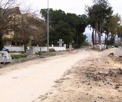 İznik'te yarım asırlık ağaçlar kuruduğu gerekçesiyle kesiliyor