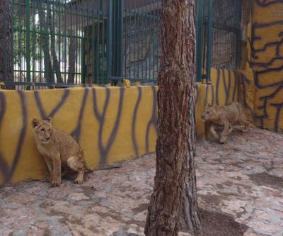 Erdoğan'ın aslanları yuvalarına yerleşti
