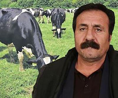 KHK ile ihraç edildi, şimdi de 'ineklerine kayyum atandı'