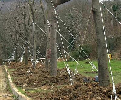 Maçka Parkı'ndan sökülen 176 ağaç yeni yerine dikildi