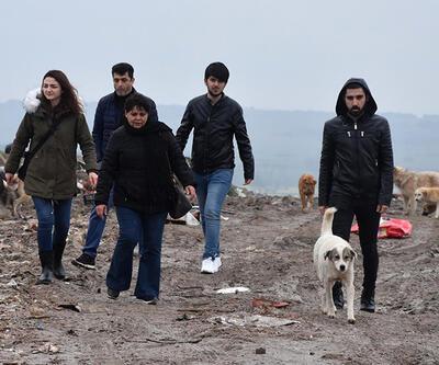 Edirne'de 500 köpek ortadan kayboldu
