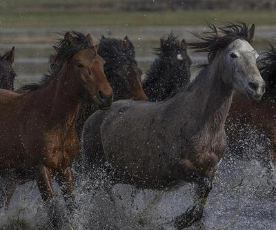 Yılkı atları fotoğrafçıların gözdesi oldu