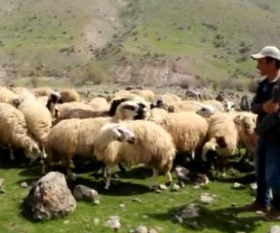Ahmet Eşref Fakıbaba kayıtsız kalmamıştı. Sürü çobanı İzzet Hurma'dan yeni açıklama