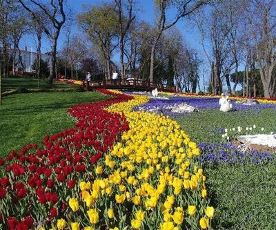 İstanbul'da lale festivali başladı: Kent rengarenk oldu