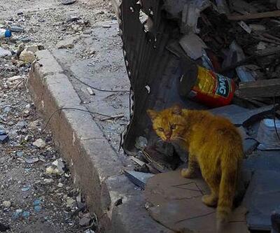 Suriye'deki sokak hayvanları için tıbbi malzeme yardımı