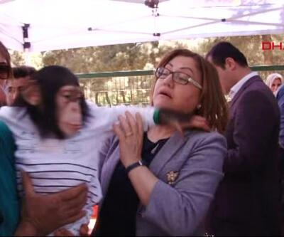 AK Partili Fatma Şahin, şempanze darbelerinden son anda kurtuldu