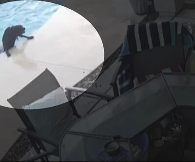 Kahraman köpek, arkadaşını boğulmaktan böyle kurtardı