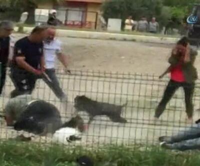 Pitbull polislere saldırdı