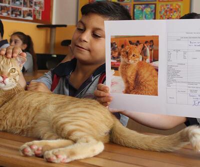 """Kedi Tombi de karne aldı: Karnesi """"pekiyi"""""""