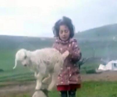 Keçi yavrusuna şarkı söyleyerek dans ettirdi