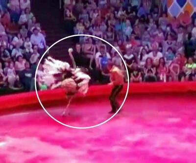 Sirkte devekuşu paniği: Seyircilerin arasına daldı