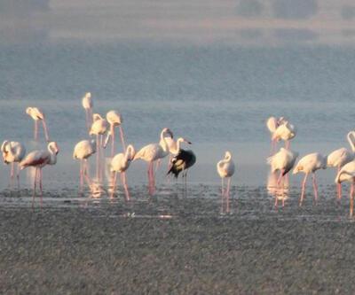 """Flamingoların tek sıra """"sabah yürüyüşü"""""""
